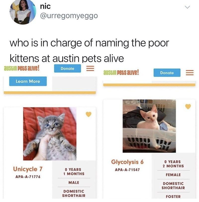 22 Adoptable Cats That Have The Stupidest Names Imaginable Funny Cat Names Pets Funny Cats Dogs