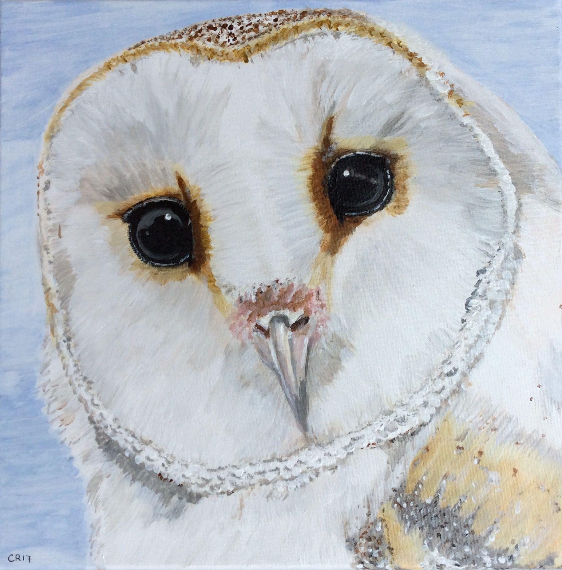 Barn owl Acryl painting Size 30x30