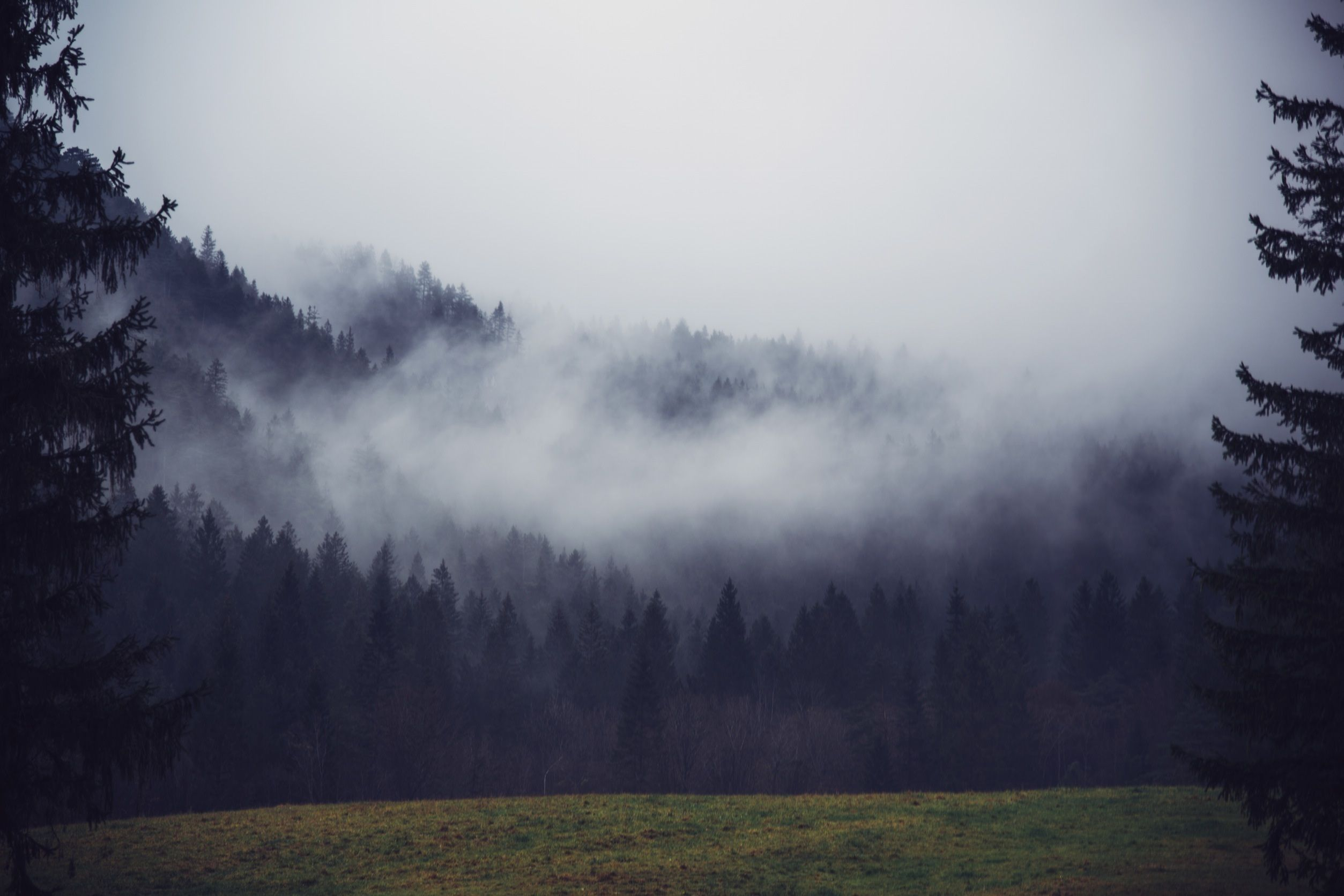 Landscape Tree Nature Forest Wilderness Mountain Cloud Fog Sunrise Mist Countryside Sunlight Morning Hill Dawn Mountain Range Landscape Scenic Witch Aesthetic Dawn forest deer trees fog nature