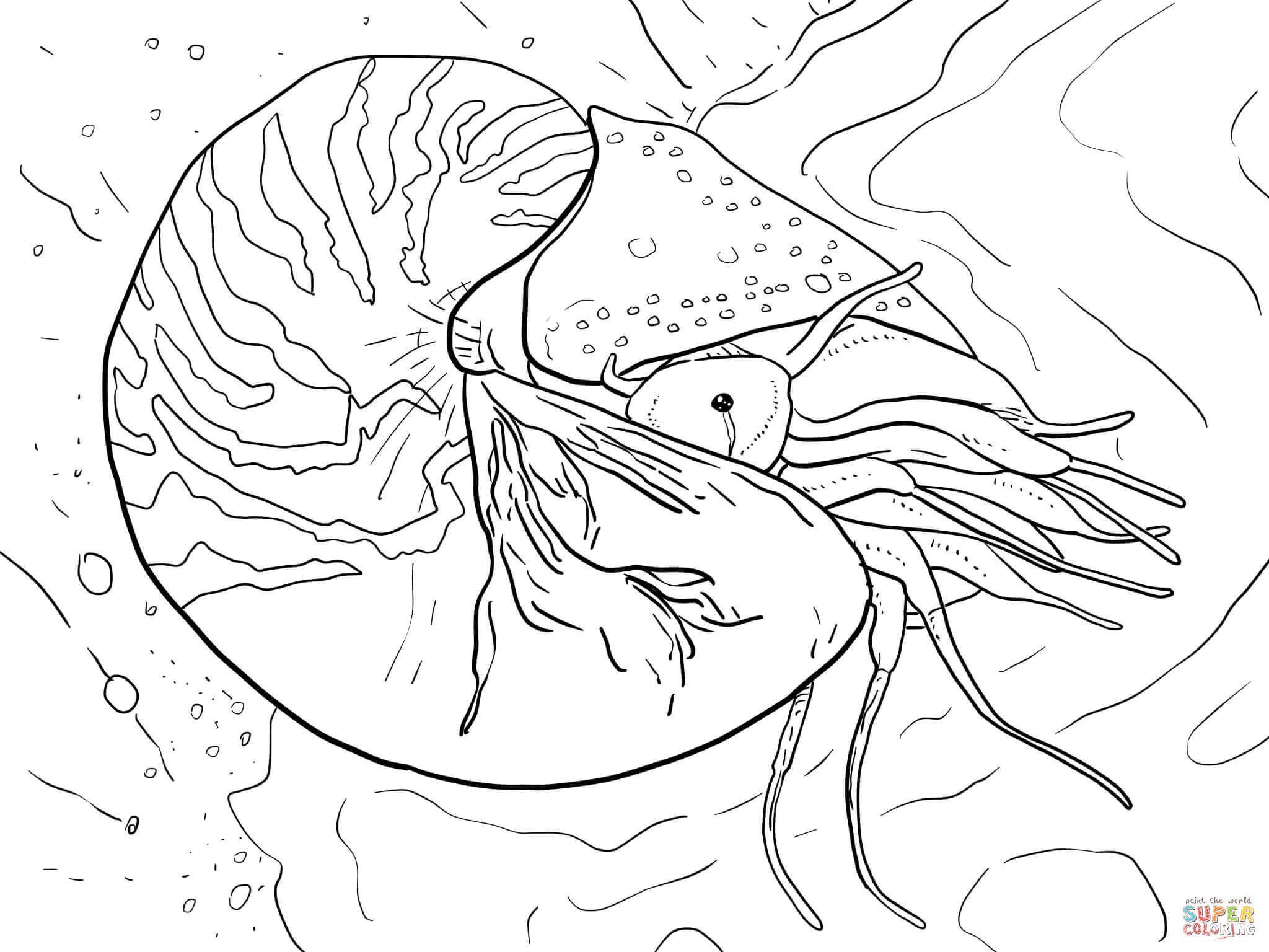 unterwasser tiere malvorlagen word | amorphi