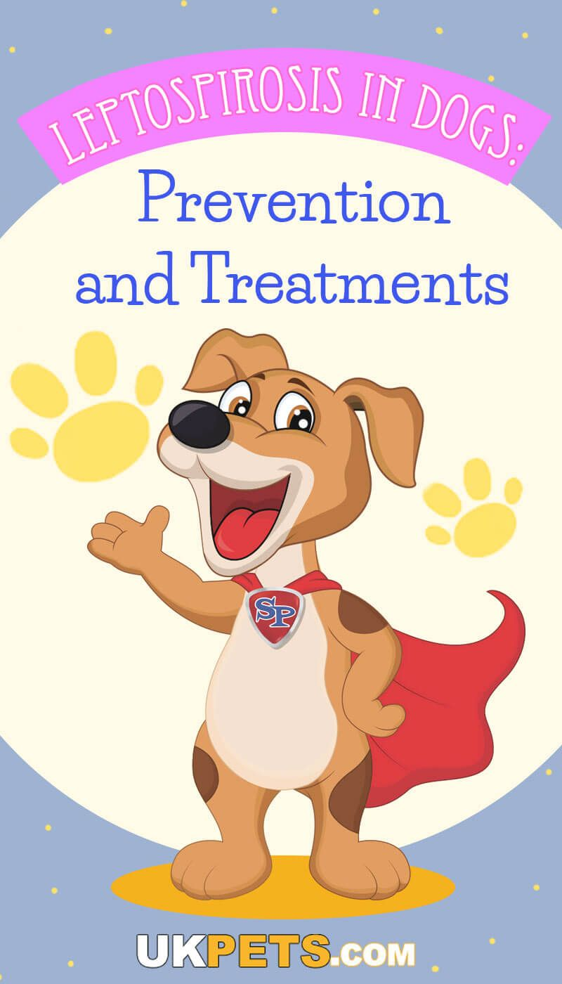 Park Art|My WordPress Blog_When To Euthanize A Dog With Liver Failure Uk