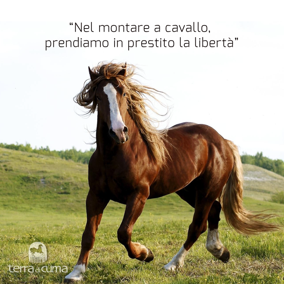 Bien connu cavallo #cavalli #terradicuma #Horse #Horses #equinecare  LK12