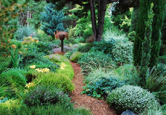 Northwest Garden Nursery Garden Photo Gallery Woodland Sun