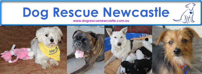 Support a Rescue - DOG RESCUE Newcastle...please share. | Let's turn Facebook Orange for Animal Cruelty Awareness. | causes.com