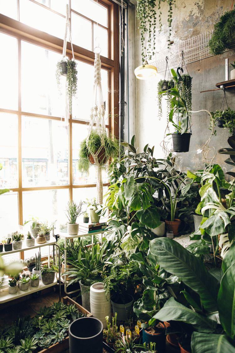 Conservatory Archives — London #plants