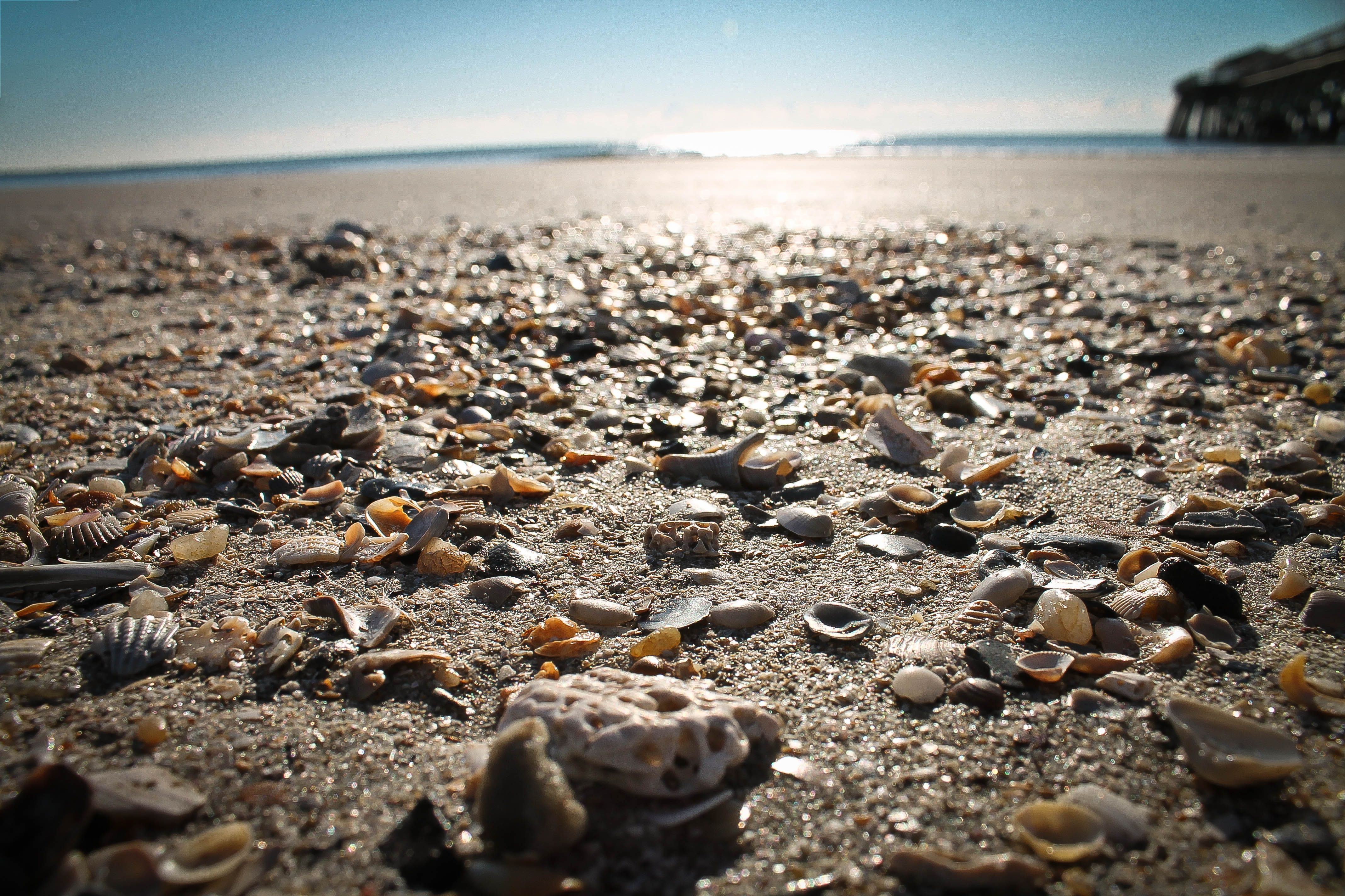 Myrtle Beach South Carolina Seashells Ocean