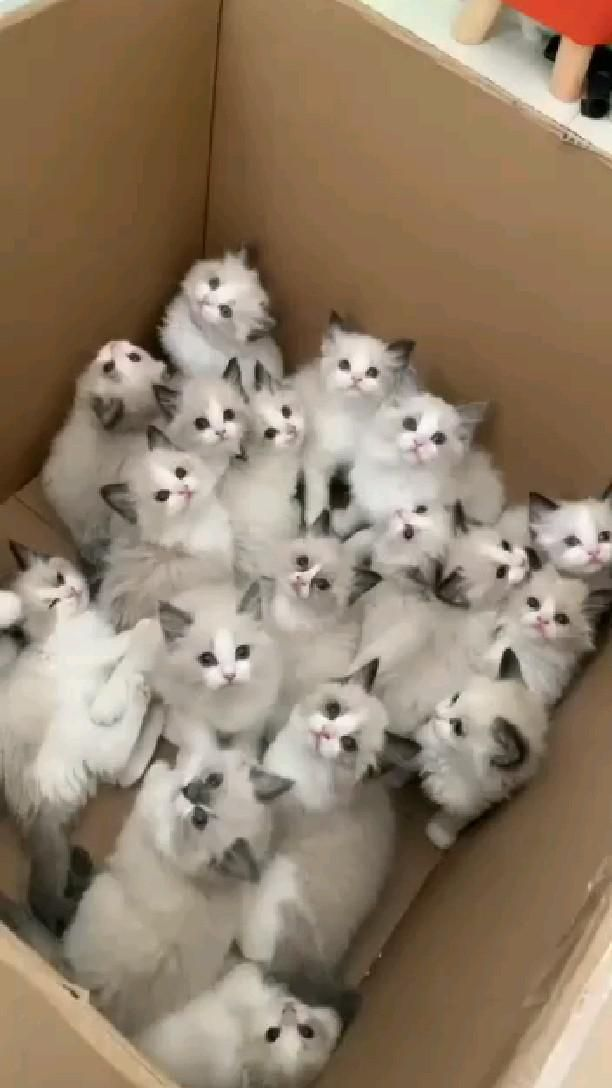 Viral Cats