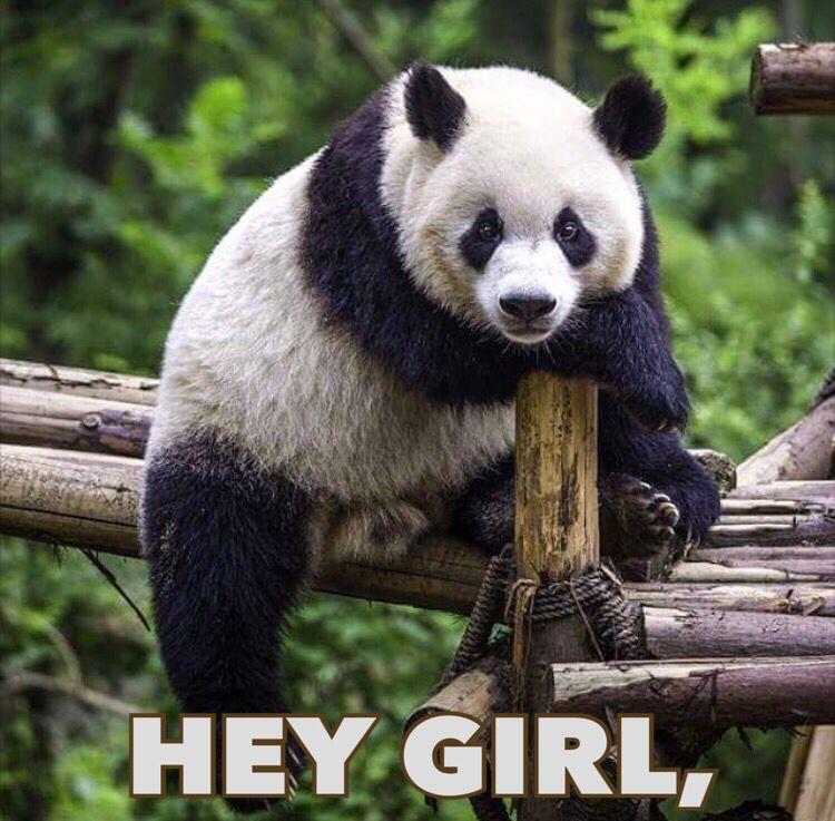 Couldn T Resist This Flirty Cute Panda Meme Perfect Pose To Say Hello Funny Silly Daily Hey Girl Panda Panda Bear Cute Panda