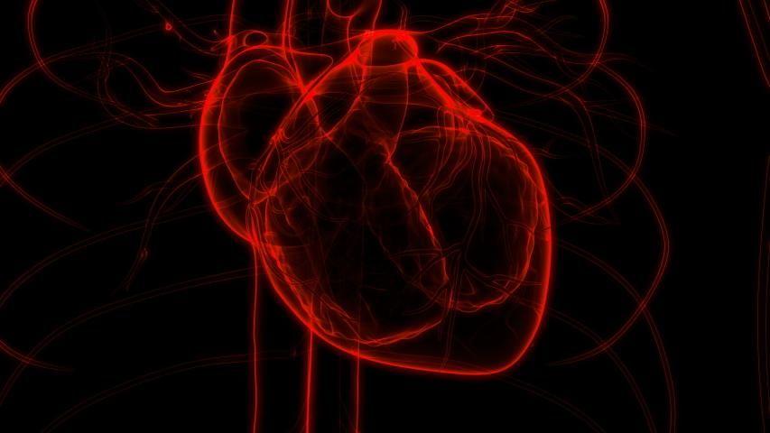 21+ Human Circulatory System Heart Beat Stock Footage Video