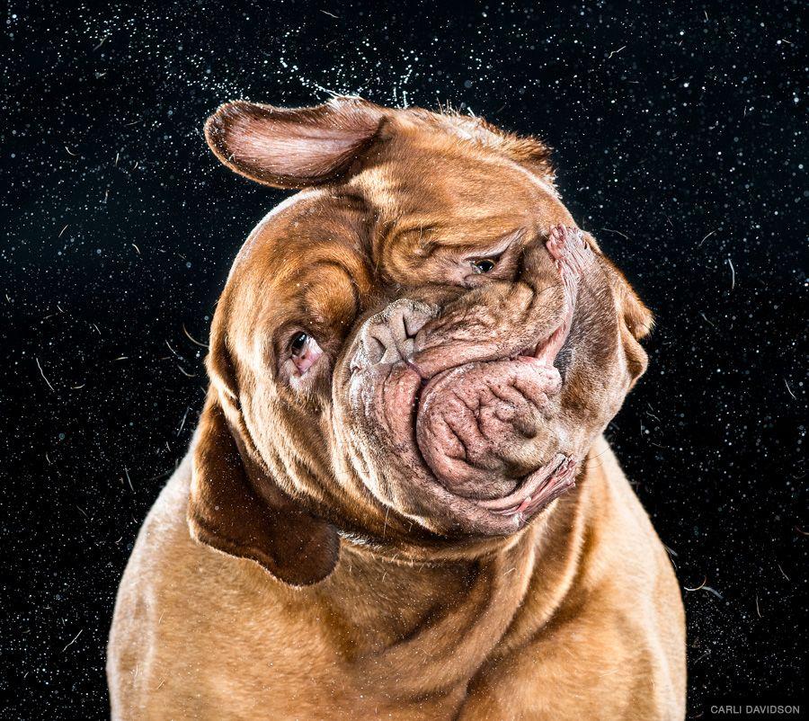 Carli Davidson Shake Book 2 Dog Shaking Dog Photography
