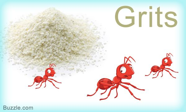 Home Remedies To Get Rid Of Ants Grits Rid Of Ants Get