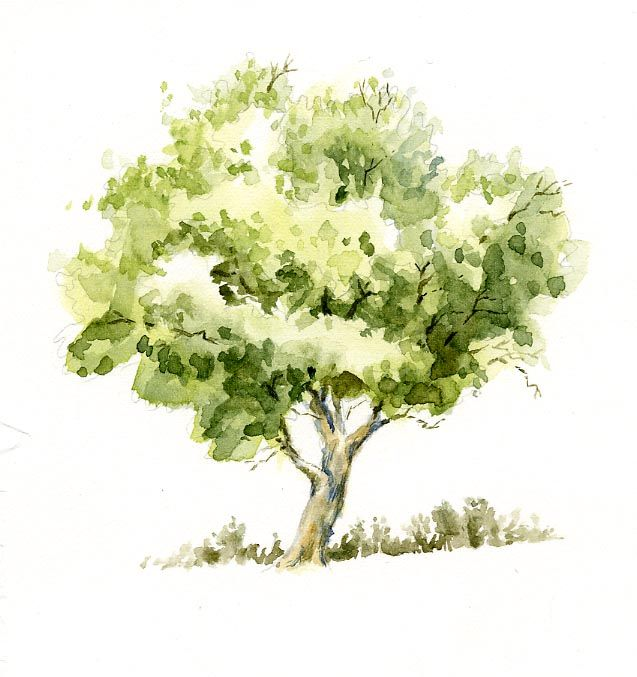 (Reference) Watercolor+Trees | Sweet Nature Watercolor Tree Sketch - Basic Tree Work Using ...