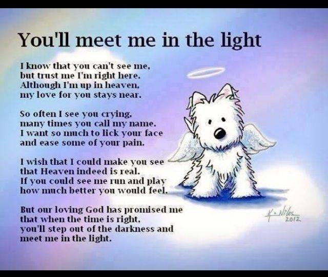 You'll meet me in the light - A poem for the passing of a dog.