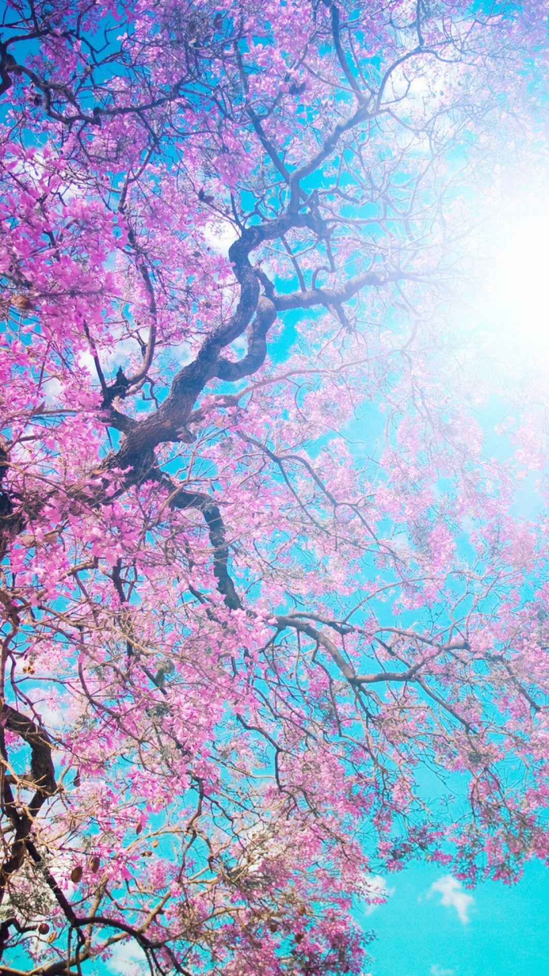 Blue Cherry Blossom Tree Wallpaper