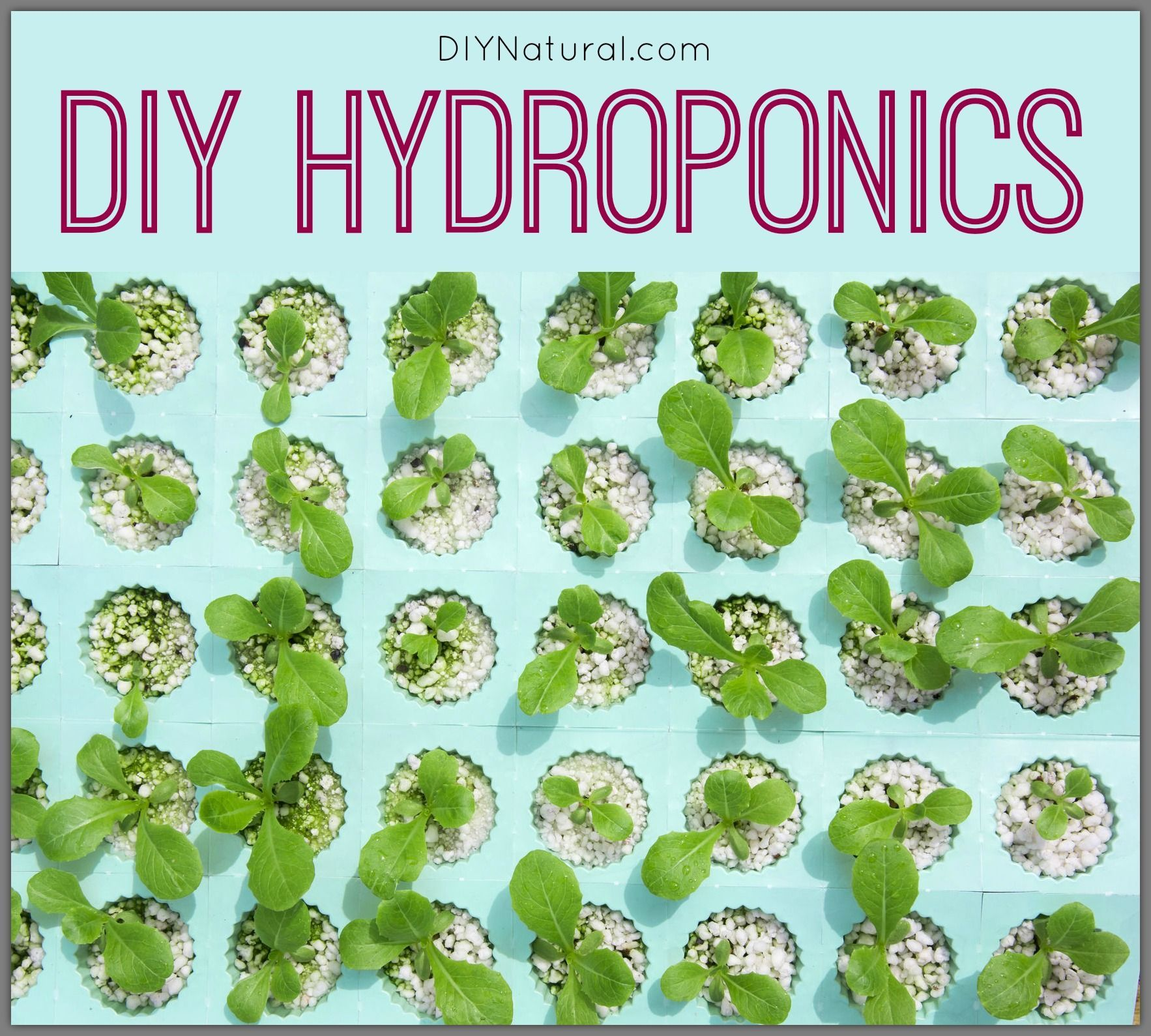 Diy Hydroponics Allow For Simple Inexpensive Gardening Systems That Work Even When Temperatures Are