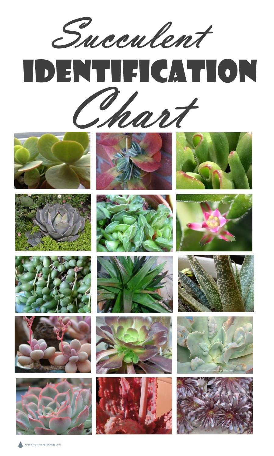 Succulent Identification Chart Gathering Descriptions And Names For All Kinds Of Succulents Is Bewildering There Are Just So Many