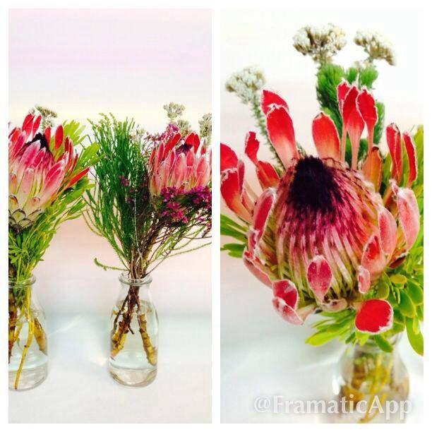 Jarrón con flores africanas, proteas con verdes africanos | Ramos de ...