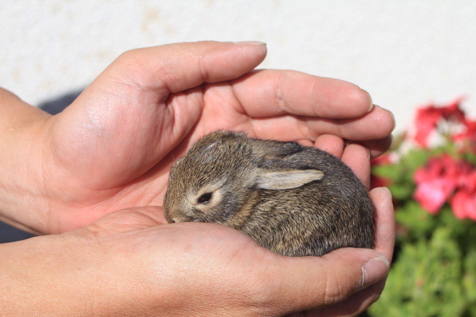 Vw Rabbit Truck For Sale