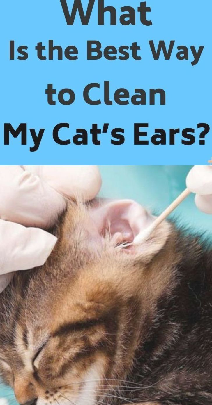 What Is the Best Way to Clean My Cat's Ears? It's common