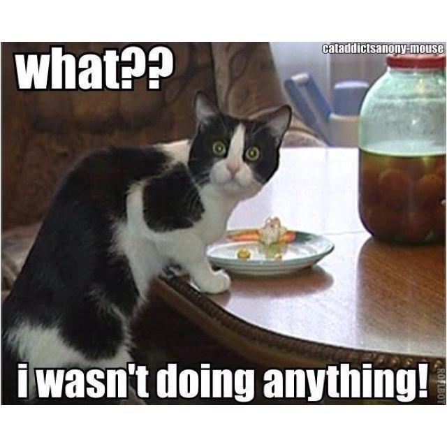 Guilty cat!   Cats, Funny cat memes, Bad cats