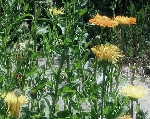 Choosing Herbs for Healing Magic