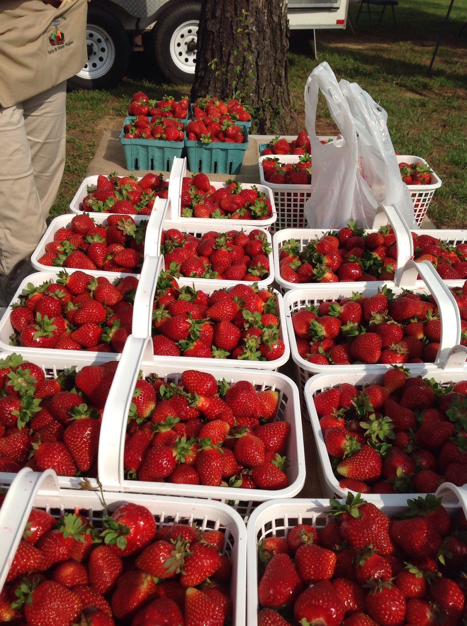 Strawberries from Flat Top Mountain Farm at St Albans