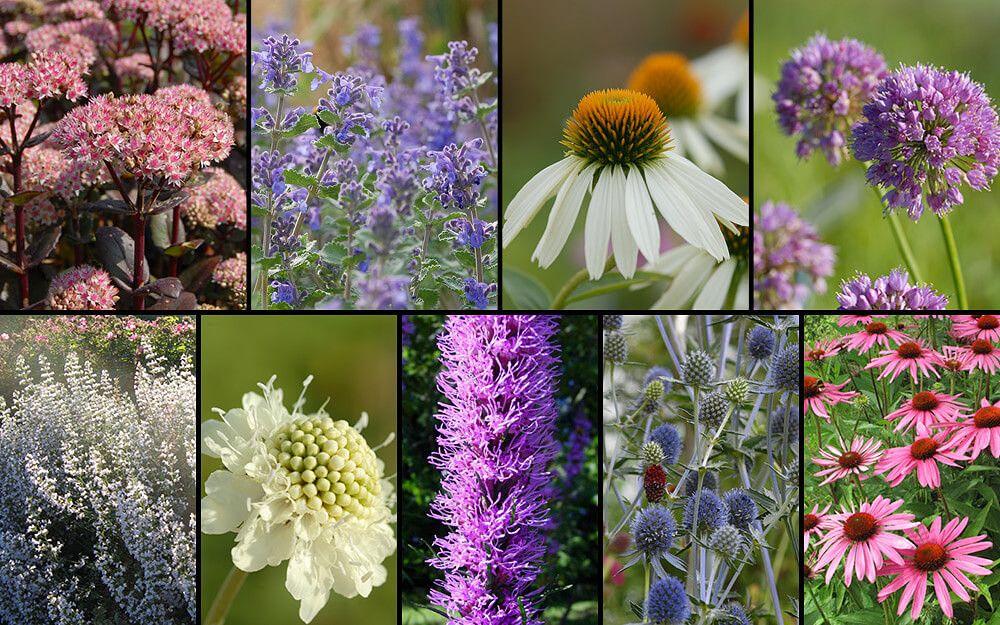 Das Staudenbeet Zum Nachpflanzen Lockt Insekten Wie Bienen Und Schmetterlinge In Den Garten Jetzt Im Mein Schoner Garten S Staudenbeet Pflanzen Mittagsblume