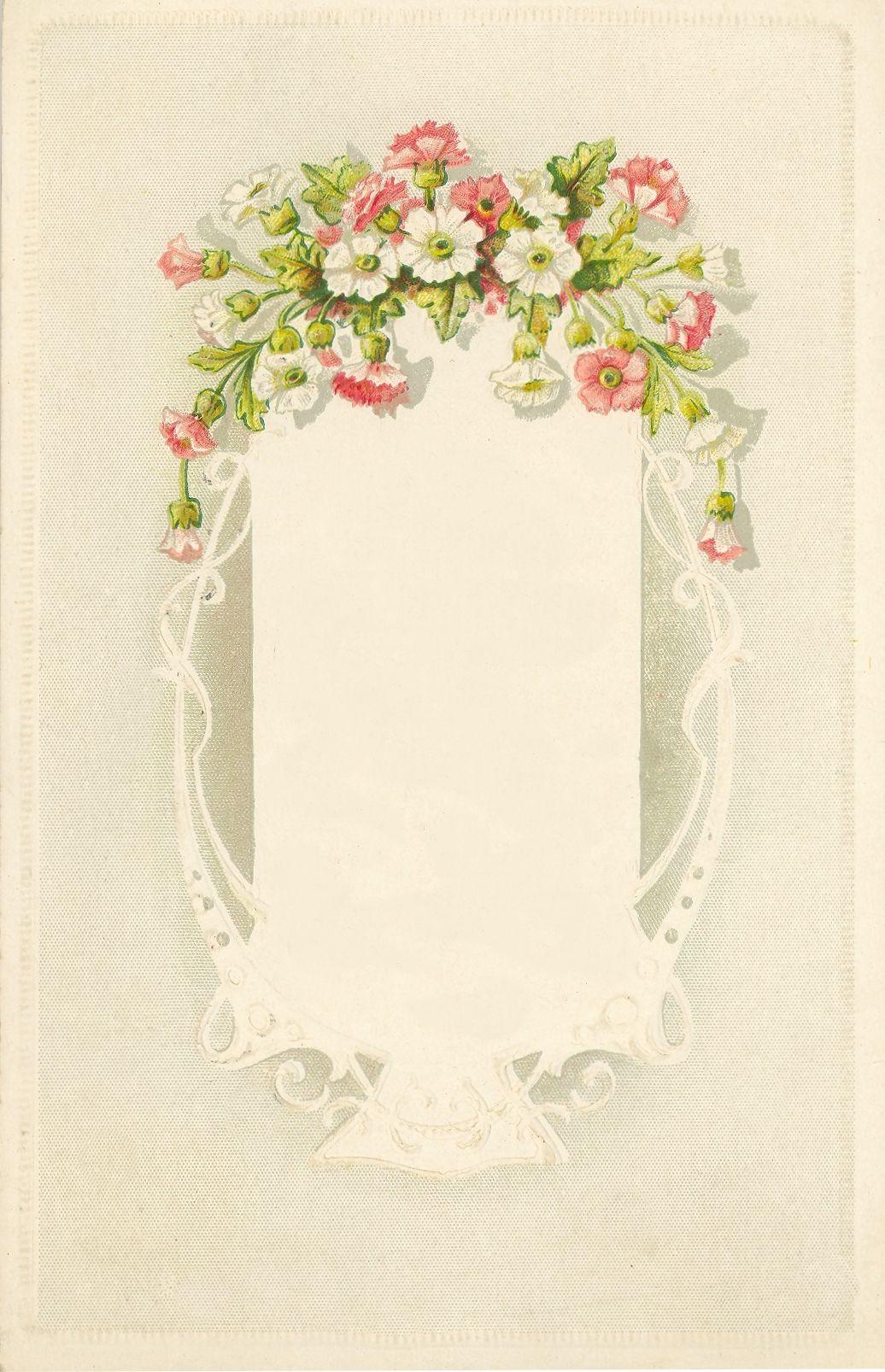 Rosa Delicada Y Flores Blancas Encaje Como Marco