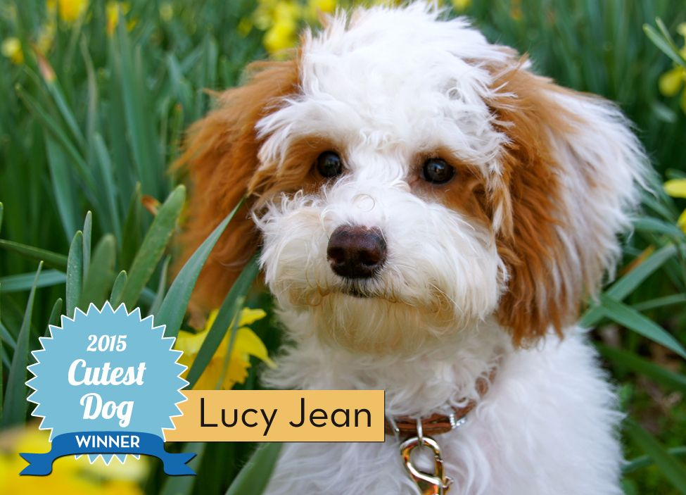 And The Winner Of Soiree S Cutest Dog Contest Is Dog Contest