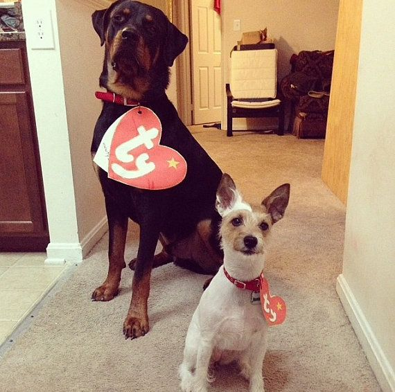 d0d9704eb1a Pet Halloween Costume TY Beanie Babies Tag by JacsStore89 on Etsy