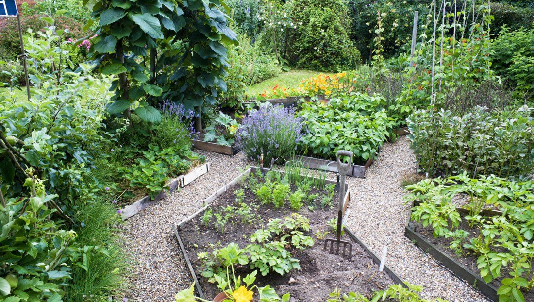 how to plan a pretty and productive vegetable garden - Garden Design Vegetable Patch