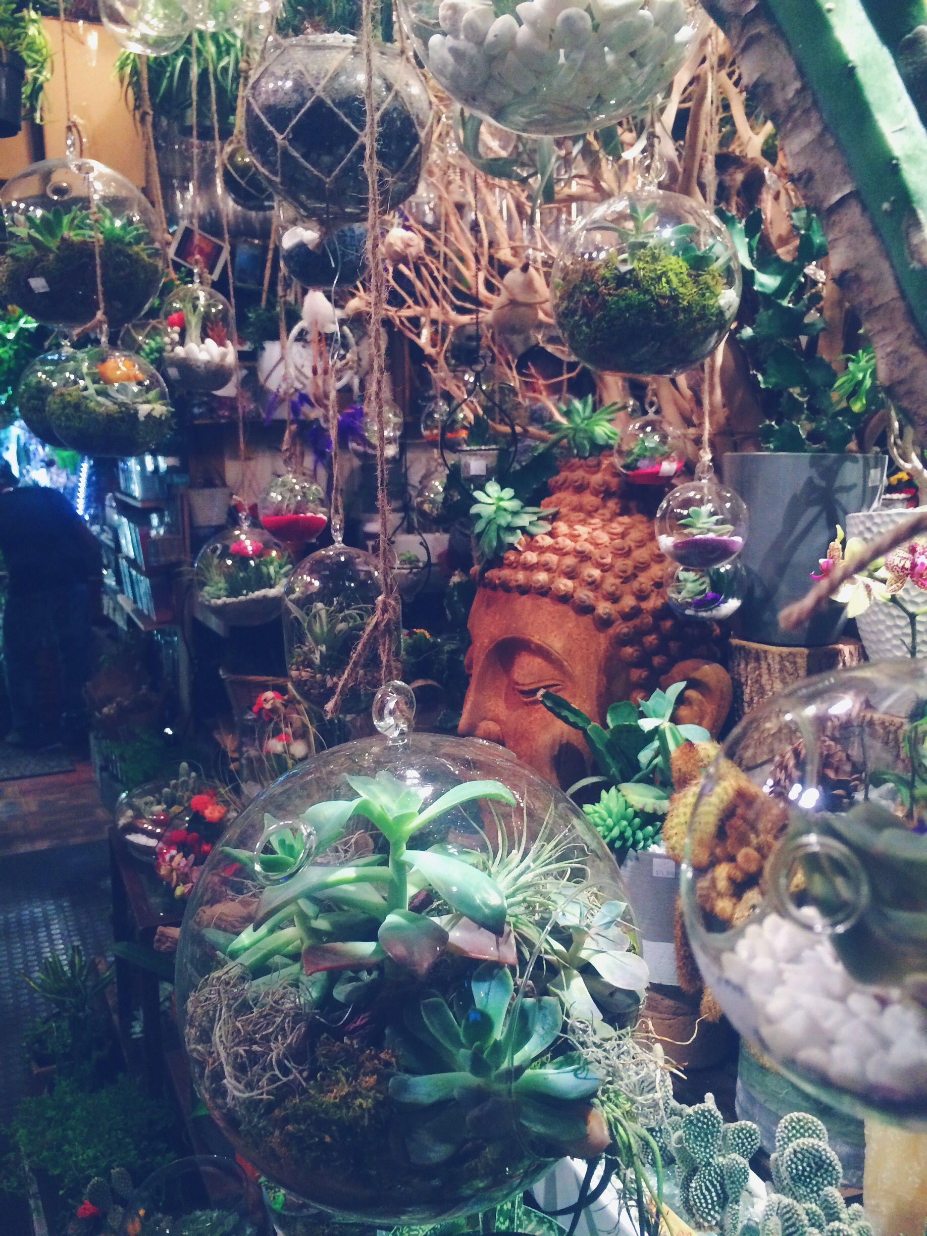 Hidden Succulent Paradise In East Village Nyc Things To Do
