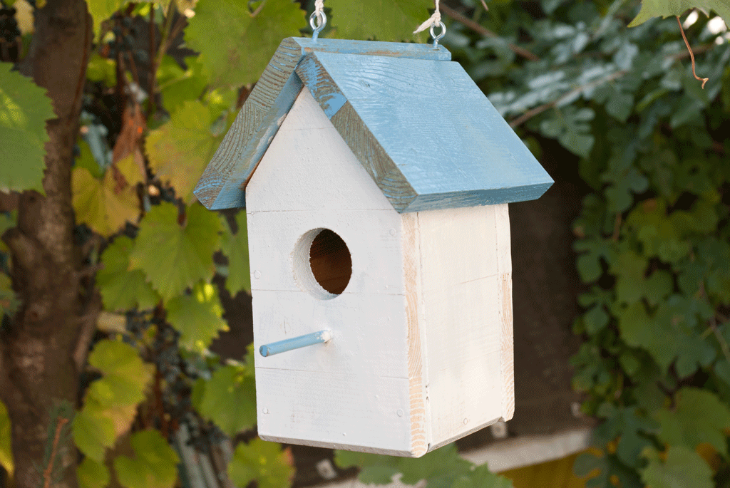 How to build a bird house with step by step instructions for How to frame a house step by step