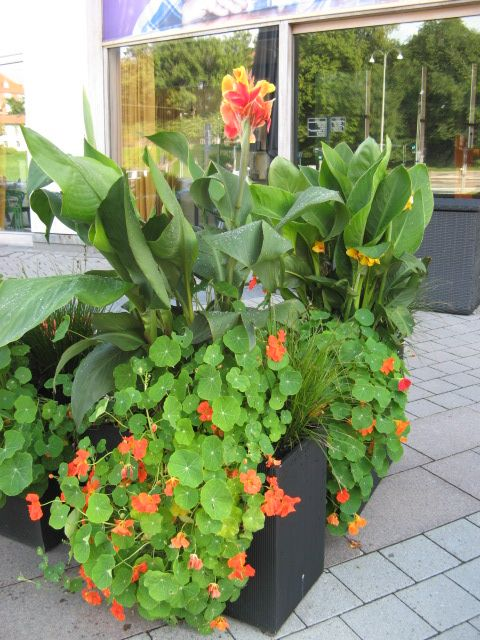 edinburgh and east lothian creative window boxes and containers garden garden design. Black Bedroom Furniture Sets. Home Design Ideas