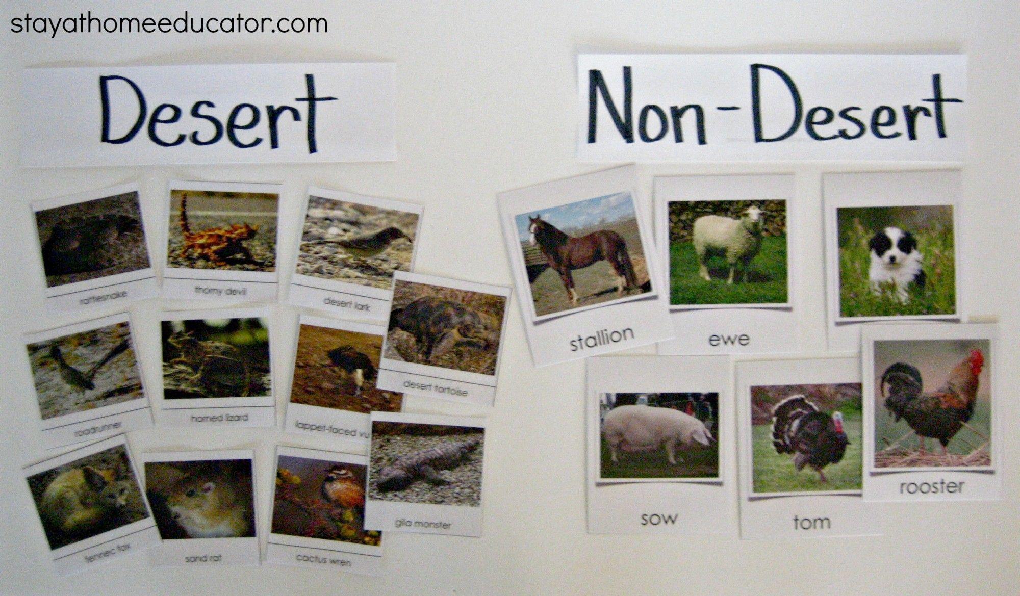 Desert Vs Non Desert Animal Sort