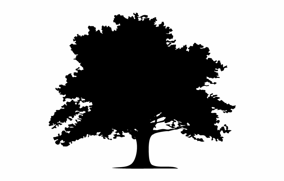 Oak Tree Silhouette Png Trees Logo Black And White Is Found On Pngtube Downlo Oak Tree Silhouette Oak Tree Silhouette Tree Silhouette Oak Tree Drawings