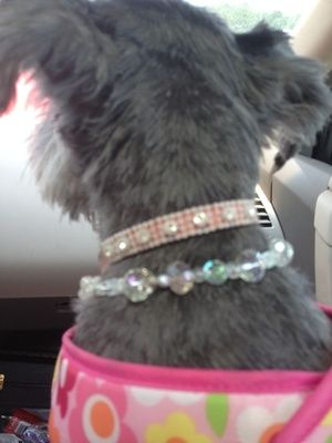 Free Stuff: Handmade Swarovski, Real Pearl & Gemstone Bling Stretch Doggie Necklace - Listia.com Auctions for Free Stuff