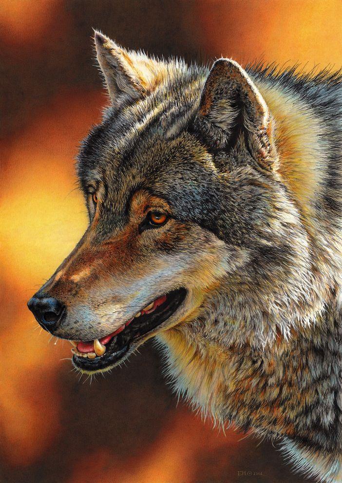 все волки фото картинки рисунки до, после этого