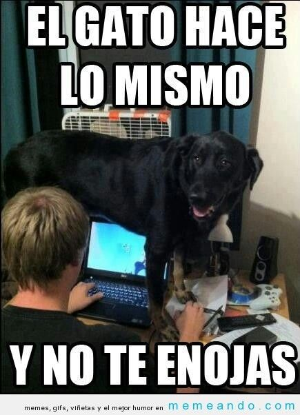 Pin By Cristina On El Verbo Amar Funny Animals Funny Dogs Funny Animal Pictures