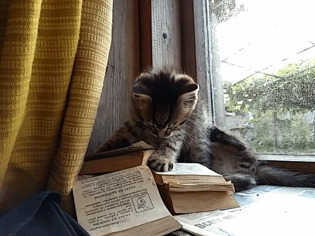 How to turn the page #kitten #cute #reading a small book