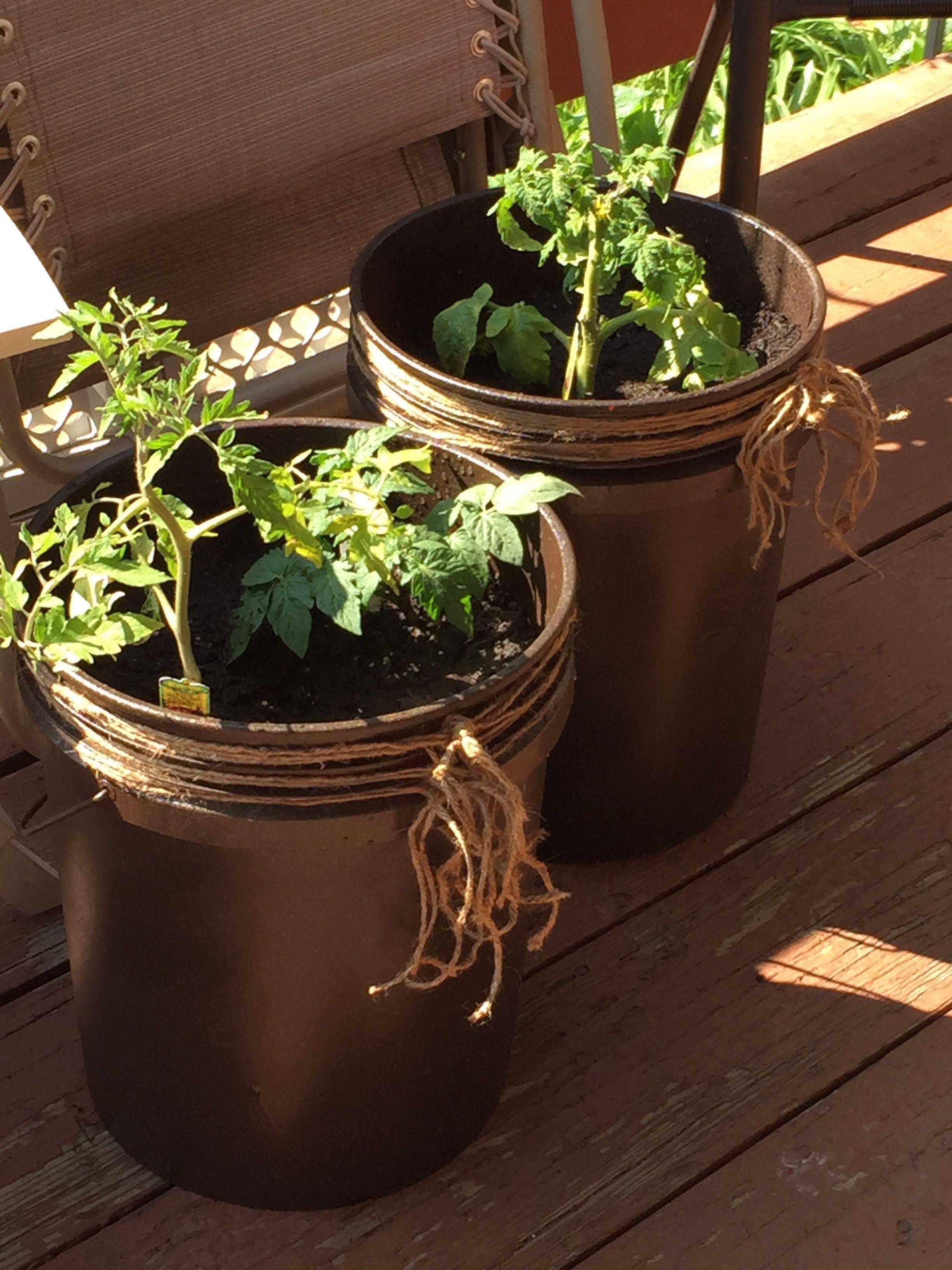 diy 5 gallon bucket patio container tomato planter spray a 5 gallon bucket and add twine