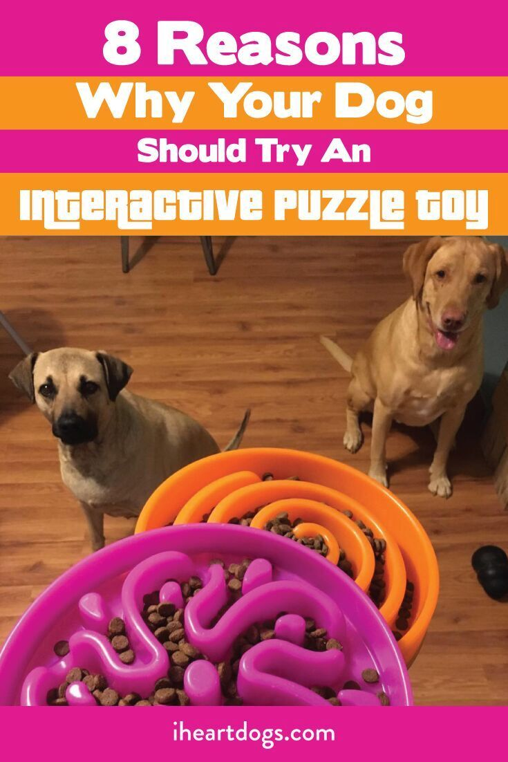 8 Reasons Why Your Dog Should Try An Interactive Puzzle Toy Puppy Puzzle Dogs Your Dog