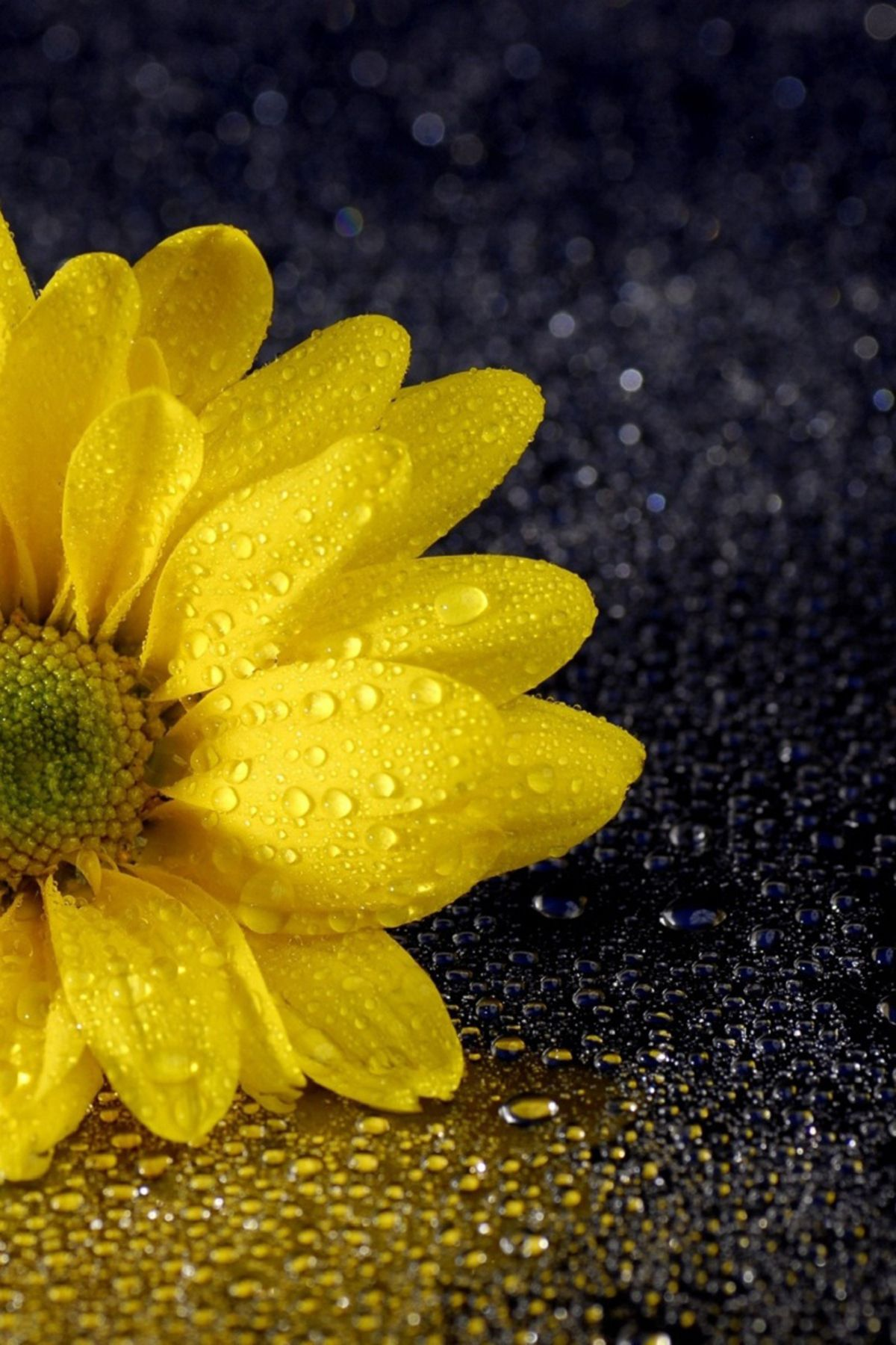 Yellow Flower And Water Drizzle Fabulous Mobile Wallpaper Mobile