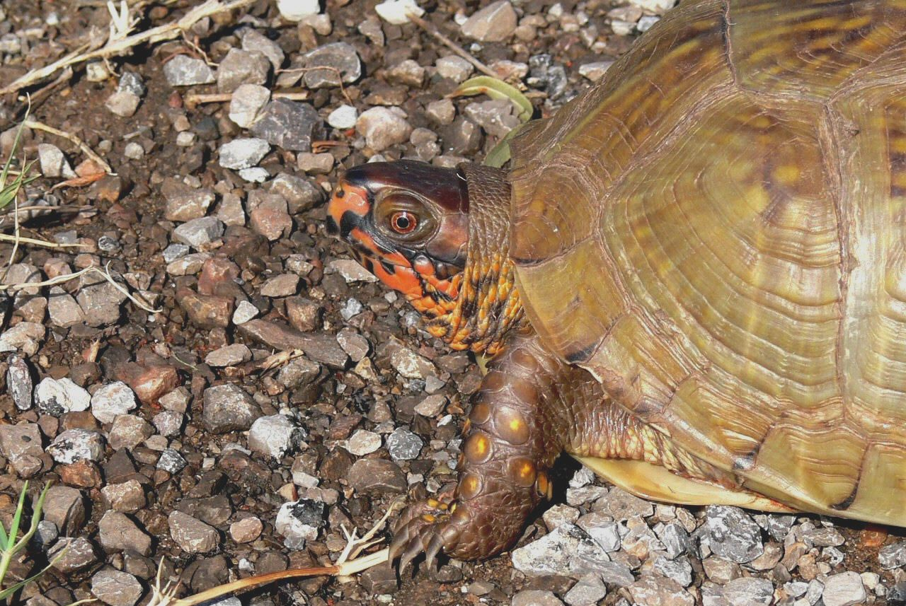 how to care for a turtle you found
