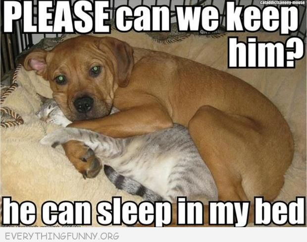 Funny Caption Dog Please Can We Can Keep Him He Can Sleep In My