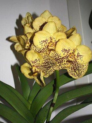 come annaffiare le orchidee | Coltelli | Pinterest