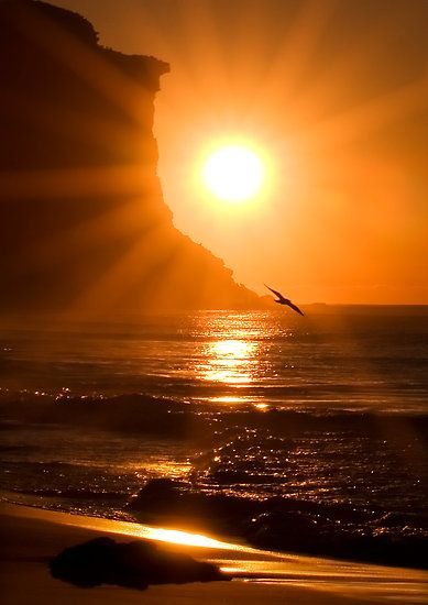 Sunrise Cliff And Bird Soars Over The Sea Sun Rise Sun Set In