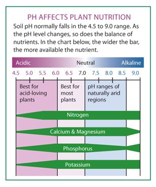 928b312745bf50eb8a0a7d4816fa8916 - How Does Ph Affect Plant Growth And Gardeners Gardens