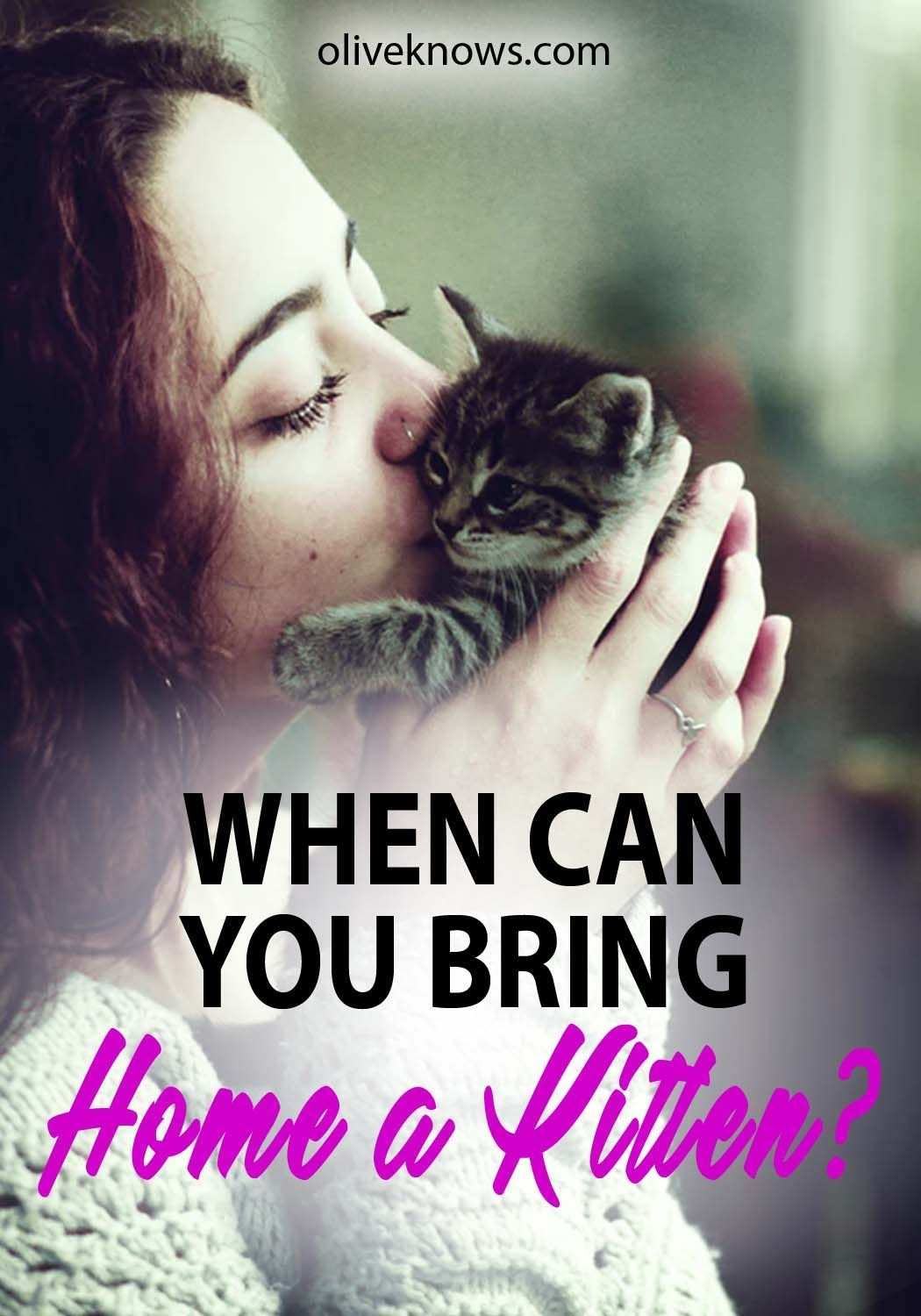 When Can You Bring Home A Kitten Oliveknows Cat Health Cat Care Tips Pet Insurance Cost