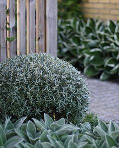 Photo of Mediterranean Inspired Garden Designs